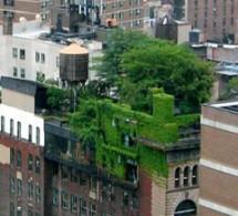 سقف سبز پلی یورتان